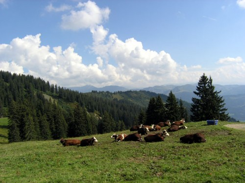 troupeau-vaches-plan-are.jpg